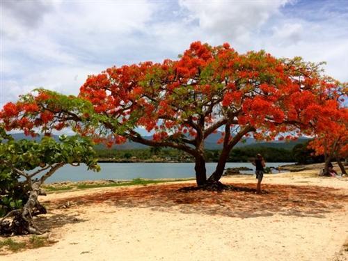 vacanta in Trinidad